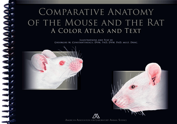 mouse-anatomy
